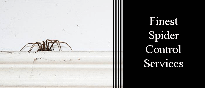 Finest Spider Control Service