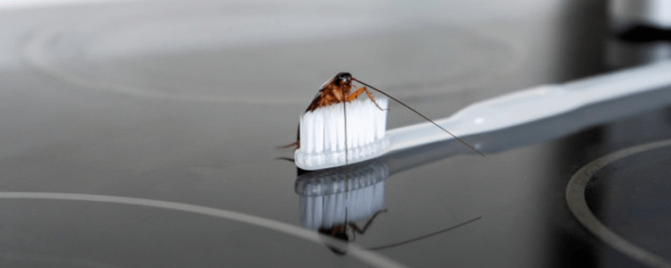 Reliable Cockroach Control Services